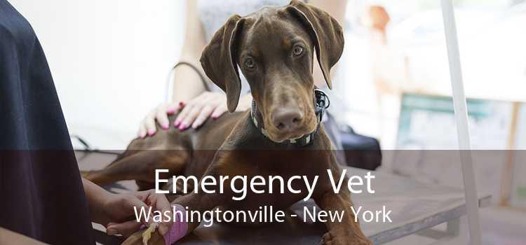Emergency Vet Washingtonville - New York