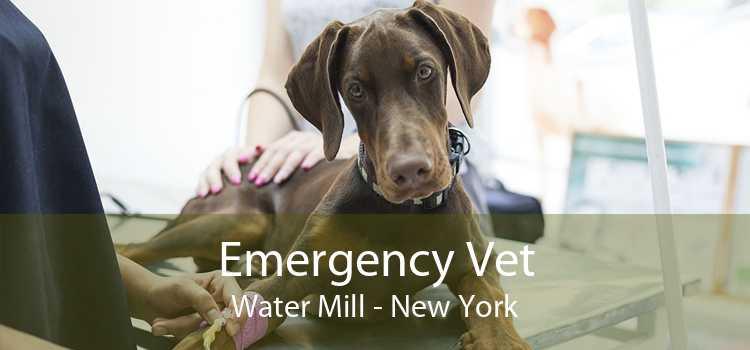 Emergency Vet Water Mill - New York