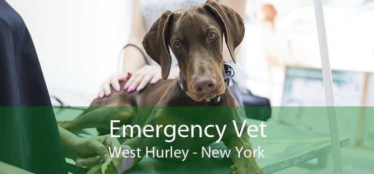 Emergency Vet West Hurley - New York