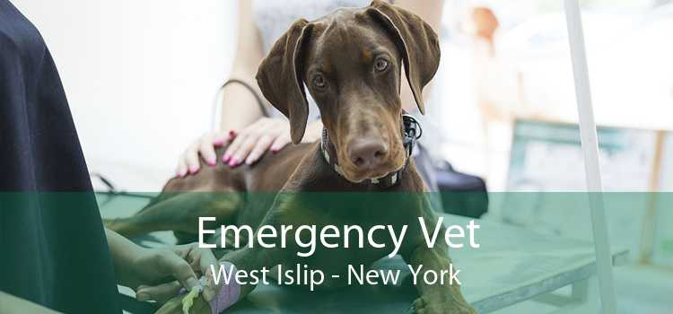 Emergency Vet West Islip - New York