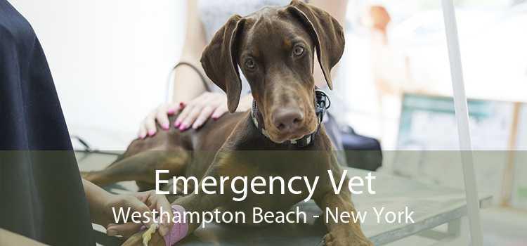 Emergency Vet Westhampton Beach - New York