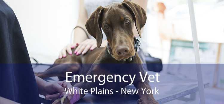 Emergency Vet White Plains - New York