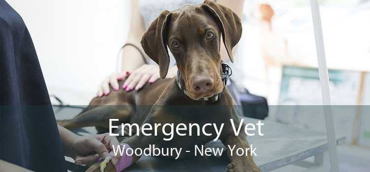 Emergency Vet Woodbury - New York