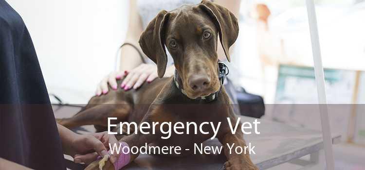 Emergency Vet Woodmere - New York