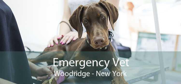 Emergency Vet Woodridge - New York