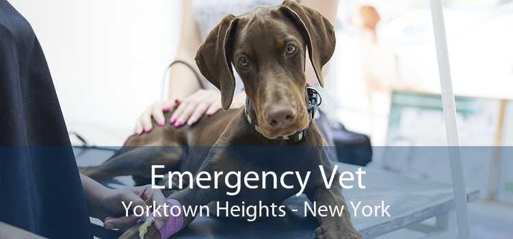 Emergency Vet Yorktown Heights - New York