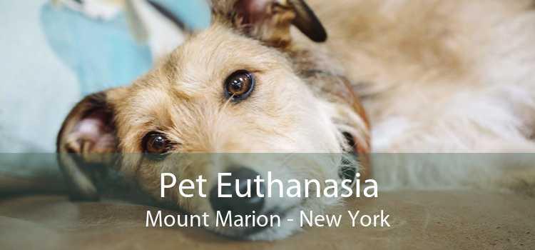 Pet Euthanasia Mount Marion - New York