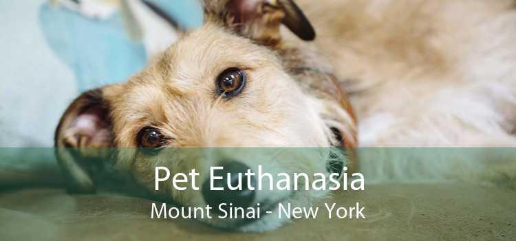 Pet Euthanasia Mount Sinai - New York