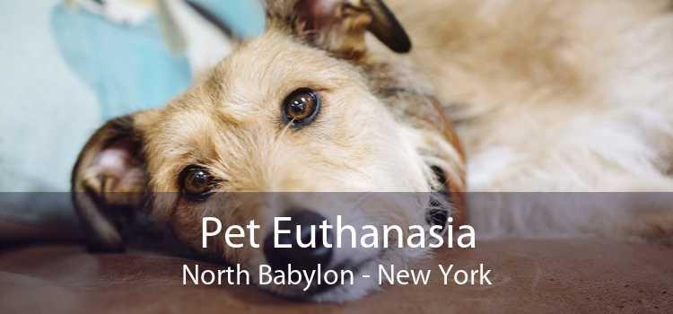 Pet Euthanasia North Babylon - New York
