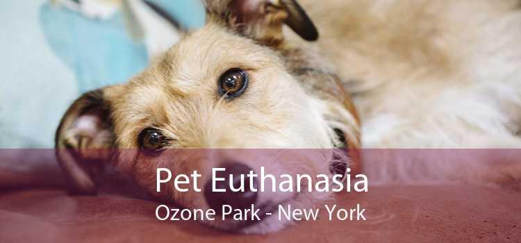 Pet Euthanasia Ozone Park - New York