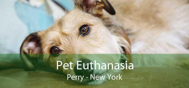 Pet Euthanasia Perry - New York