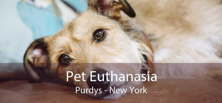Pet Euthanasia Purdys - New York