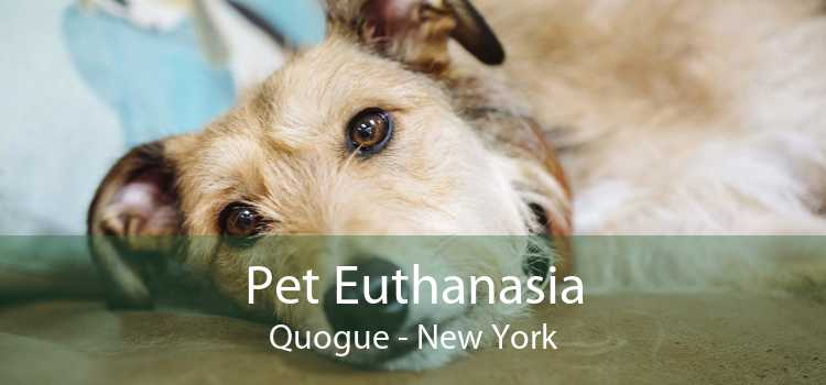 Pet Euthanasia Quogue - New York