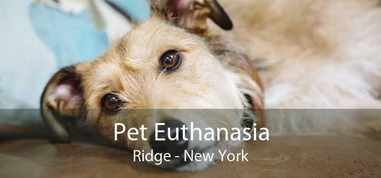 Pet Euthanasia Ridge - New York
