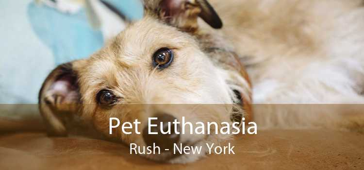 Pet Euthanasia Rush - New York