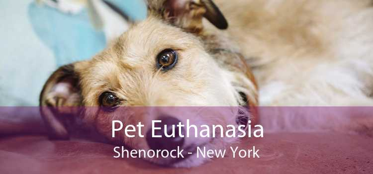 Pet Euthanasia Shenorock - New York