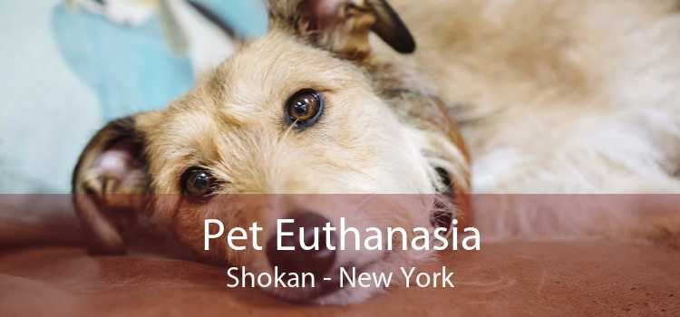Pet Euthanasia Shokan - New York