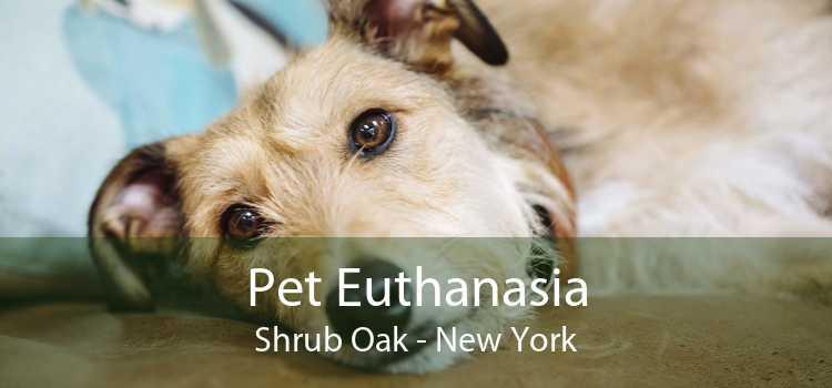Pet Euthanasia Shrub Oak - New York