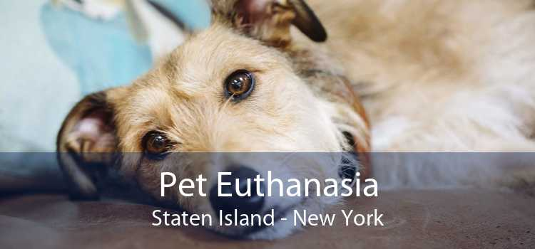 Pet Euthanasia Staten Island - New York