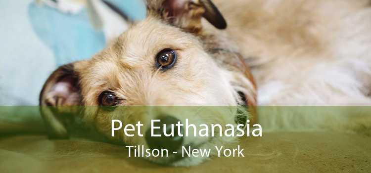 Pet Euthanasia Tillson - New York