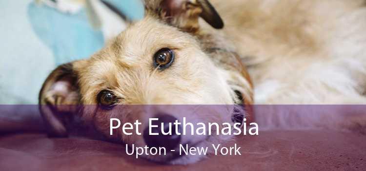 Pet Euthanasia Upton - New York