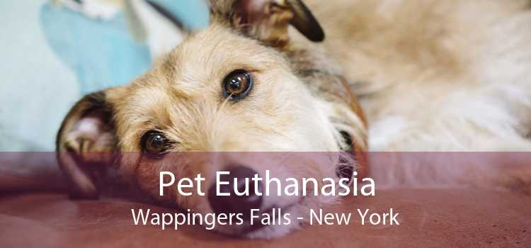Pet Euthanasia Wappingers Falls - New York