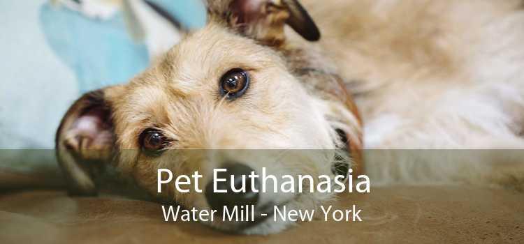 Pet Euthanasia Water Mill - New York