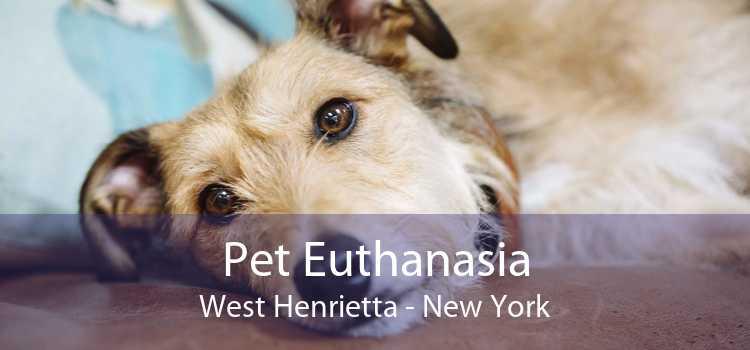 Pet Euthanasia West Henrietta - New York
