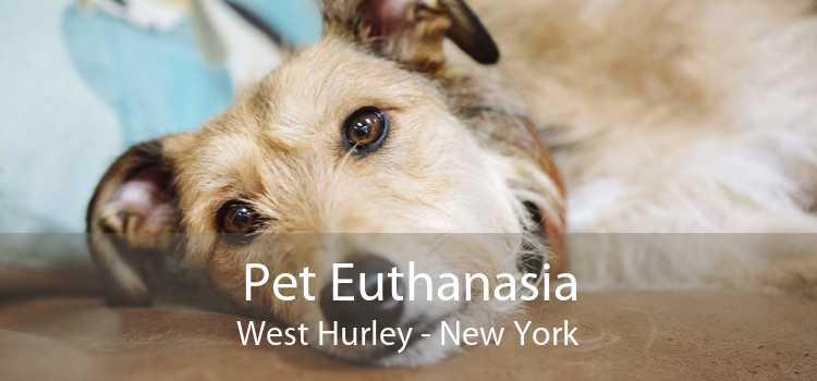 Pet Euthanasia West Hurley - New York