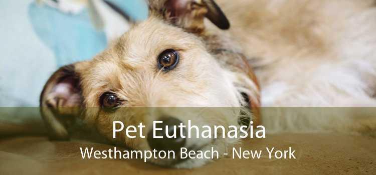 Pet Euthanasia Westhampton Beach - New York