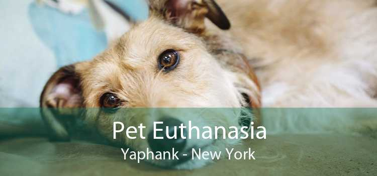 Pet Euthanasia Yaphank - New York