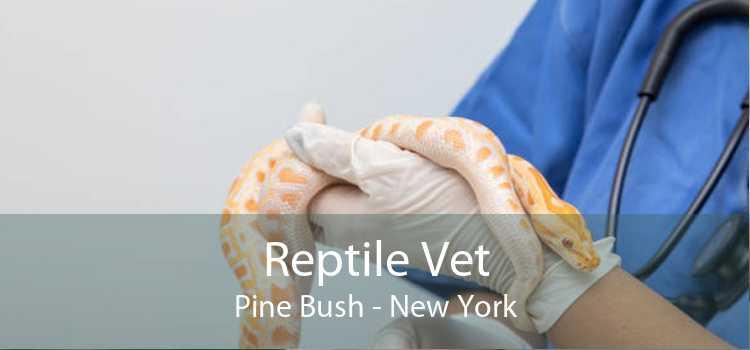 Reptile Vet Pine Bush - New York
