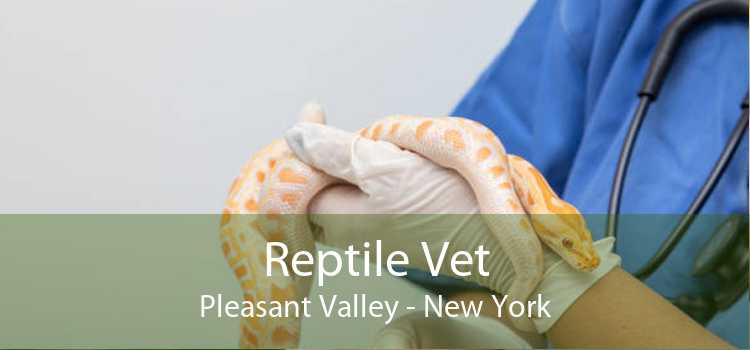 Reptile Vet Pleasant Valley - New York