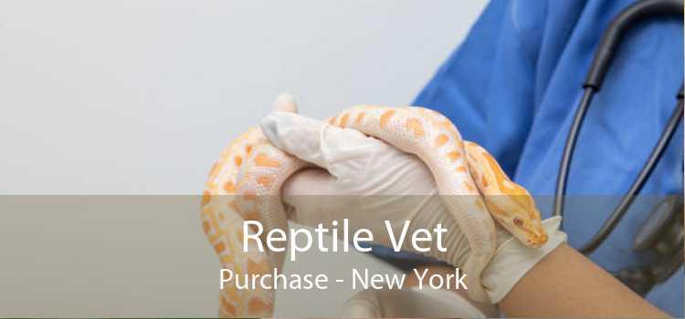 Reptile Vet Purchase - New York