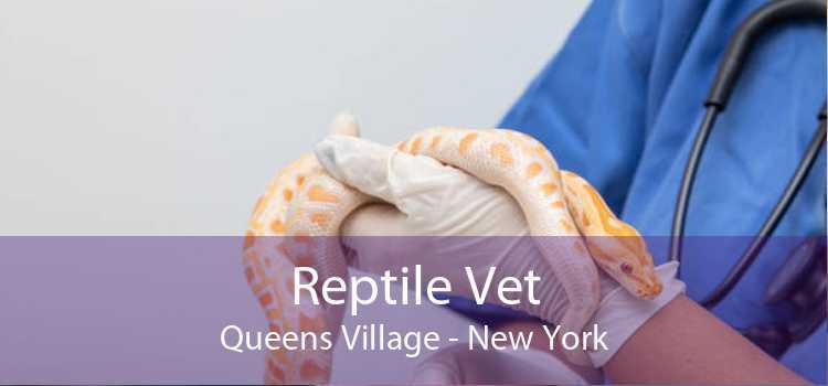 Reptile Vet Queens Village - New York