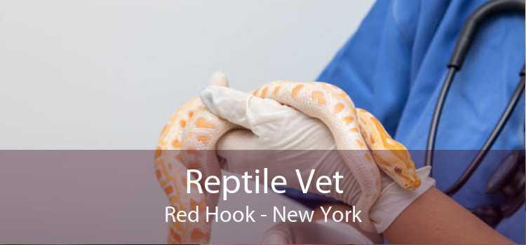 Reptile Vet Red Hook - New York