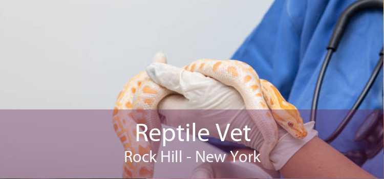 Reptile Vet Rock Hill - New York