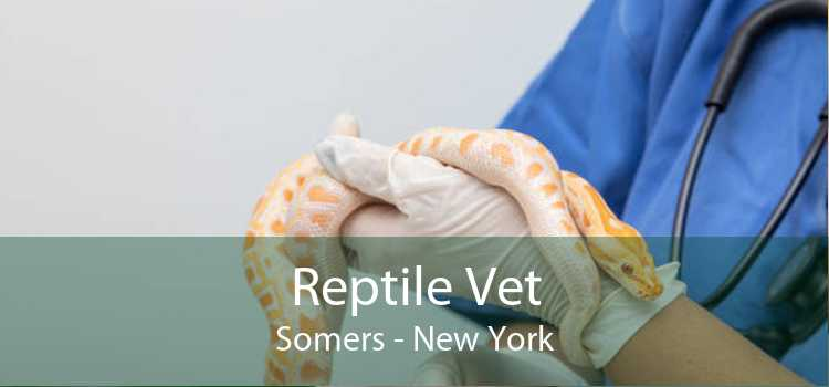Reptile Vet Somers - New York