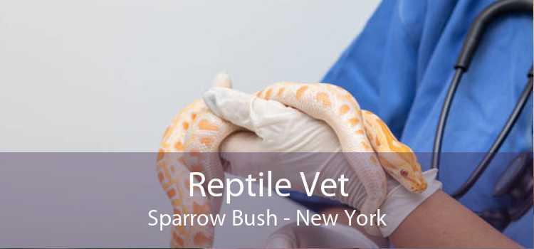 Reptile Vet Sparrow Bush - New York