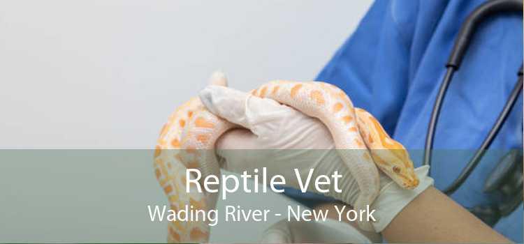 Reptile Vet Wading River - New York
