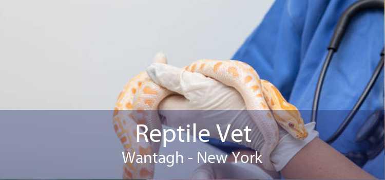 Reptile Vet Wantagh - New York