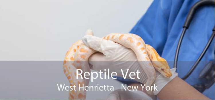 Reptile Vet West Henrietta - New York