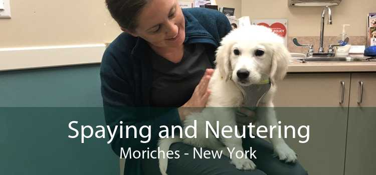 Spaying and Neutering Moriches - New York