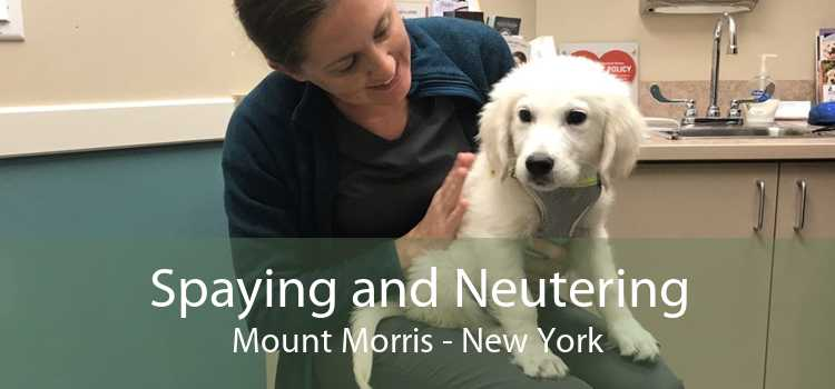 Spaying and Neutering Mount Morris - New York