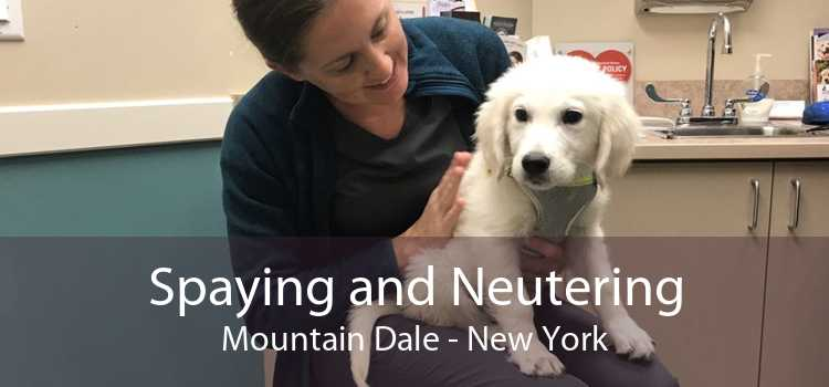 Spaying and Neutering Mountain Dale - New York