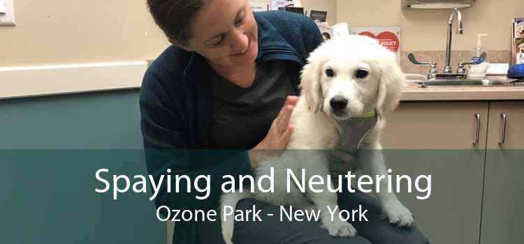 Spaying and Neutering Ozone Park - New York