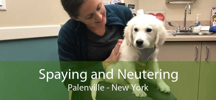 Spaying and Neutering Palenville - New York