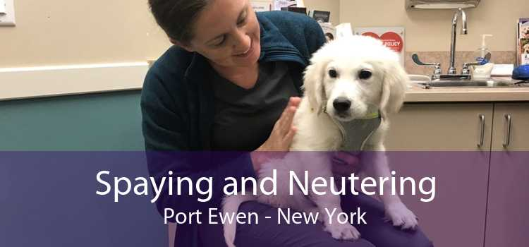 Spaying and Neutering Port Ewen - New York