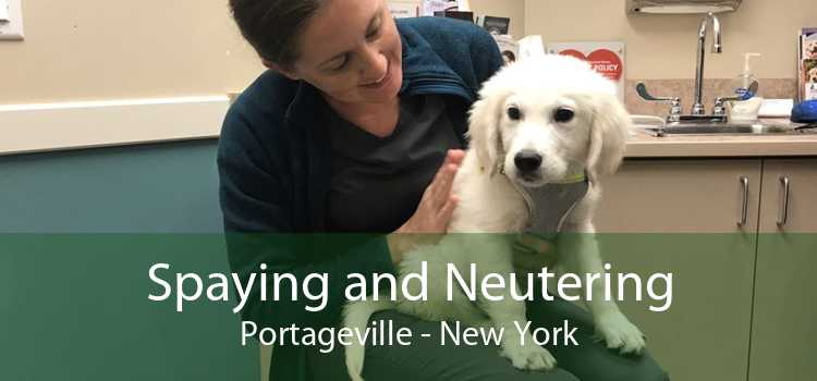 Spaying and Neutering Portageville - New York