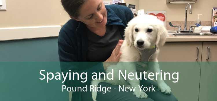 Spaying and Neutering Pound Ridge - New York